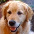 Ralph the News Dog