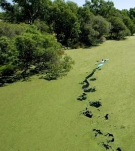 kayakerOnRiver